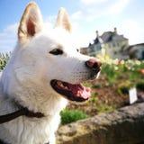 Stadthund Stockbild