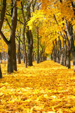 Stadtpark an der Herbstsaison, Bäume in Folge mit gefallenem gelbem Le Stockfotografie