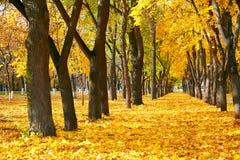 Stadtpark an der Herbstsaison, Bäume in Folge mit gefallenen gelben Blättern, helle schöne Landschaft am sonnigen Tag Lizenzfreie Stockfotos