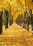 Stadtpark an der Herbstsaison, Bäume in Folge mit gefallenen gelben Blättern, helle schöne Landschaft am sonnigen Tag Stockbild