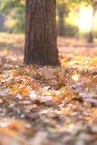 Stadtpark am Herbstabend in den Strahlen stockfoto