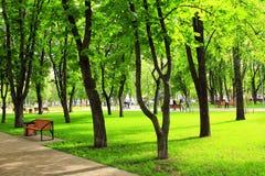 Stadtpark mit Bänke und großen grünen Bäumen Stockfotografie