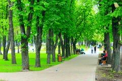 Stadtpark mit Promenadenwegbänke und großen grünen Bäumen Stockbilder