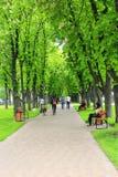 Stadtpark mit Promenadenwegbänke und großen grünen Bäumen Stockfotografie