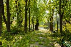 Stadtpark nach natürlichem Unglück Fallender Baum und Niederlassungen nach Naturkatastrophe Stadtpark nach Katastrophe Unglück im Lizenzfreie Stockfotos