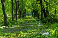 Stadtpark nach natürlichem Unglück Fallender Baum und Niederlassungen nach Naturkatastrophe Stadtpark nach Katastrophe Unglück im Stockbild