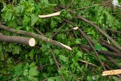 Stadtpark nach natürlichem Unglück Fallender Baum und Niederlassungen nach Naturkatastrophe Stadtpark nach Katastrophe Unglück im Stockfoto
