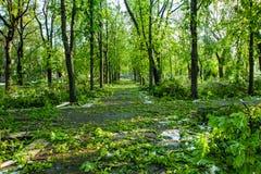 Stadtpark nach natürlichem Unglück Fallender Baum und Niederlassungen nach Naturkatastrophe Stadtpark nach Katastrophe Unglück im Stockfotografie