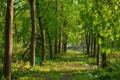 Stadtpark nach natürlichem Unglück Fallender Baum und Niederlassungen nach Naturkatastrophe Stadtpark nach Katastrophe Unglück im Stockfotos