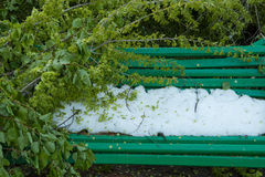 Stadtpark nach natürlichem Unglück Fallender Baum und Niederlassungen nach Naturkatastrophe Stadtpark nach Katastrophe Unglück im Lizenzfreie Stockbilder
