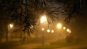 Stadtpark-Nebelniederlassung stock video