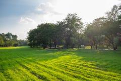 Stadtpark an Vachira Benchathat Park u. an x28; Fäule Fai Park u. x29; Lizenzfreie Stockbilder