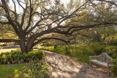 Stadtpark von Fort Worth, TX, USA Stockbilder