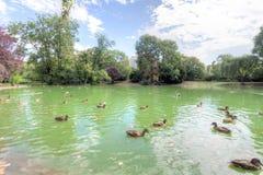 Stadtpark Wien Arkivfoto