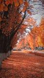 Stadtstraße im Herbst schaut erstaunlich Stockbilder