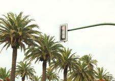 Stadtverkehrlicht gegen die Himmel- und Palmen Stockbild