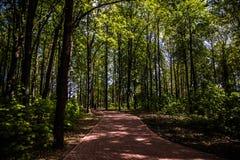 Stadtwald lizenzfreie stockfotografie