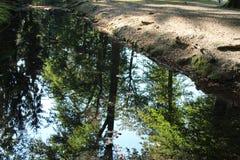 Stadtwald Colonia, Germania Immagini Stock Libere da Diritti