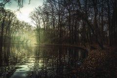 Stadtwald sjö Arkivbild