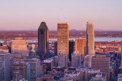 Rosa Montreal Stockfoto