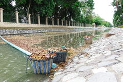 Staff leaves in water, waste water pollution garbage floating on the surface of the water. Water pollution with dirt and leaves tr Stock Photos