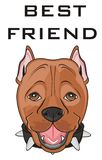 Staff is my best friend. Snout of pitbull with words best friend Stock Photography