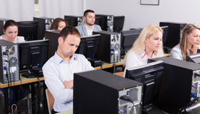 Staff sitting at desks and looking at PC screens Royalty Free Stock Images