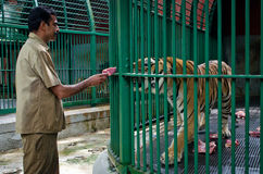 Staff of zoo feed big tiger , India Stock Photos