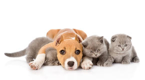 Stafford puppy embracing kittens. isolated on white background Stock Photos