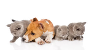 Stafford puppy and kittens lying together. isolated on white Stock Photography