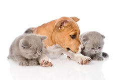 Stafford puppy and two kittens lying together. isolated on white Royalty Free Stock Photo