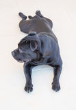 Staffordshire Bull Terrier lying down on white tiles happy and r Stock Photo