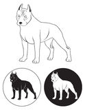 Staffordshire Terrier. Depicted in Figure Staffordshire Terrier Royalty Free Stock Image