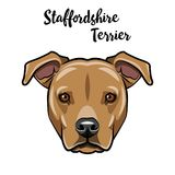 Staffordshire Terrier dog head. Staffordshire Terrier portrait. Vector.
