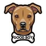 Staffordshire Terrier portrait. Bone. Good boy inscription. Dog breed. Vector. Staffordshire Terrier portrait. Bone. Good boy inscription. Dog breed. Vector Royalty Free Stock Photography