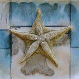 Stafish On Blue Tile Stock Images