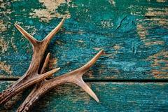 Stag antlers on vintage wood background Stock Image