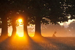 Stag basking in the morning sun Royalty Free Stock Image