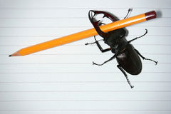 Stag-beetle. With pencil on white background Royalty Free Stock Photos