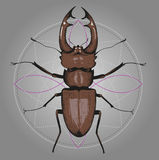 Stag beetle on background of circle. Drawn by hand. Suitable for tattoos Stock Photography