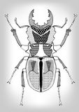 Stag-beetle, black and white drawing of beetle decorated with patterns.  Symmetric drawing,  insect on gray gradient backg Royalty Free Stock Images