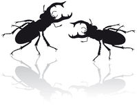 Stag beetle illustration. 2 Stag beetle vector illustration Royalty Free Stock Image