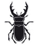 Stag beetle vector Royalty Free Stock Image