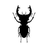 Stag beetle insect black silhouette animal Stock Image