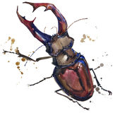 Stag beetle insect T-shirt graphics. stag beetle illustration with splash watercolor textured background. unusual illustration wa royalty free illustration