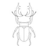 Stag-beetle. Lucanus cervus. Stock Images