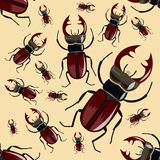 Stag beetle. Seamless pattern. Realistic insects. vector illustration
