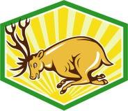 Stag Deer Charging Side Cartoon Royalty Free Stock Image
