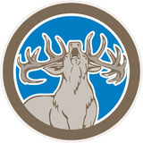 Stag Deer Roaring Circle Retro. Illustration of a stag deer buck head roaring facing front looking up set inside circle shape on isolated background done in Stock Images