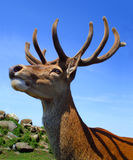 Stag head. Over a blue sky background and a natural scene Stock Images